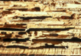 CarpenterAntDamage_Cited_HZ.jpg