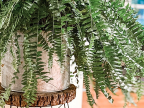 HOW TO MAKE A PLANT STAND FROM A LAMPSHADE