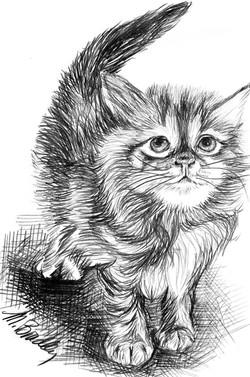 764 Cat in Pencil