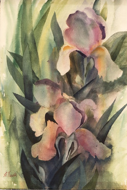 435 Iris