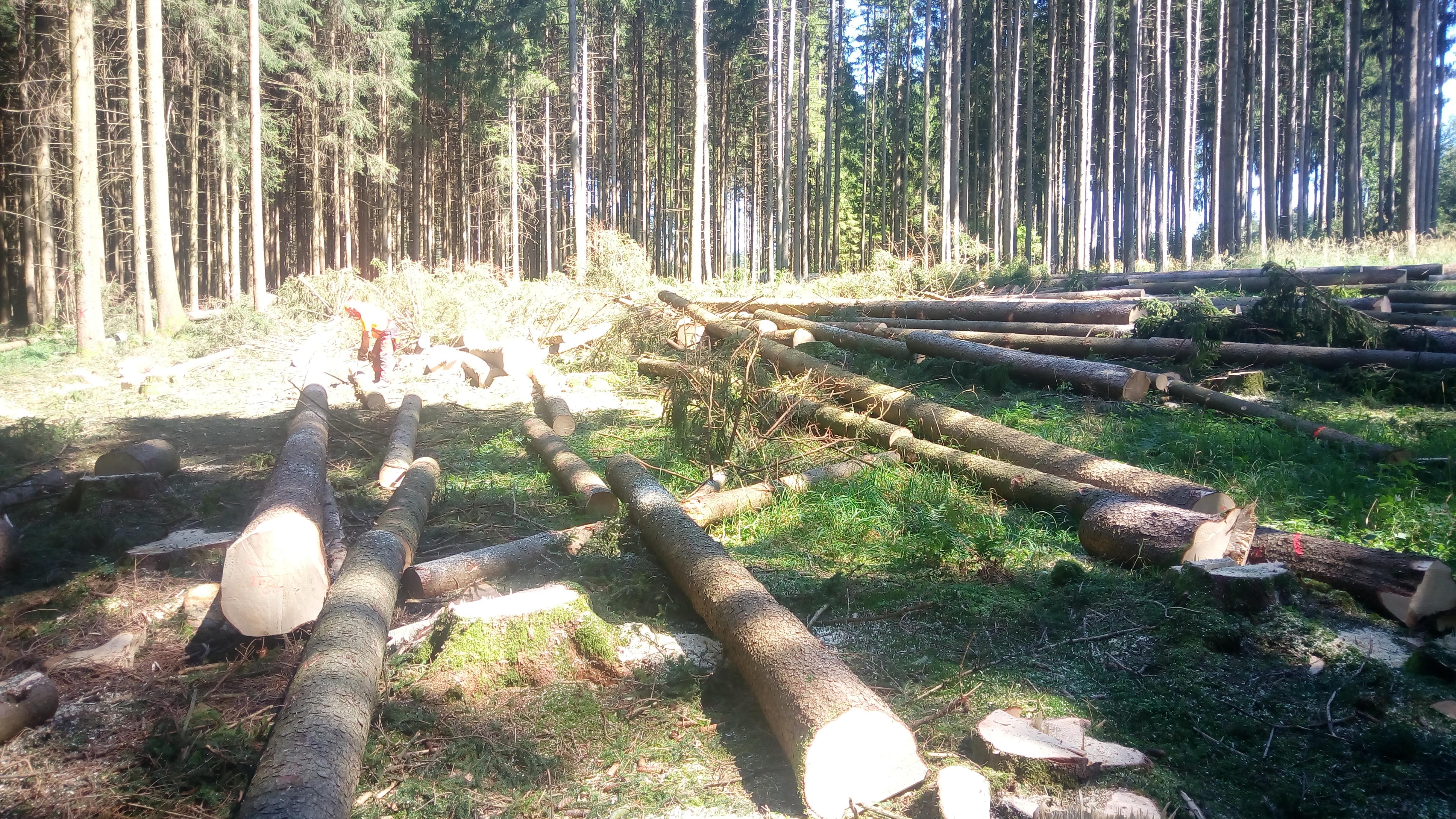 Motormanueller Holzeinschlag