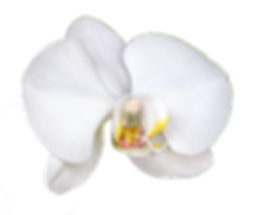 Single_orchid-right-facing.png
