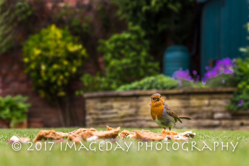 Gardens, Darlington, County Durham
