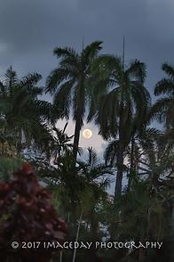 The moon and the trees - Nassau Bahamas