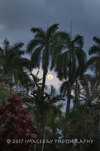 The moon and the trees - Nassau Bahamas