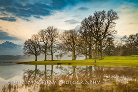 Reflection on the trees, Derwentwater, Keswick