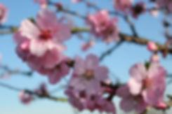 Mandelblütenfest Neustadt
