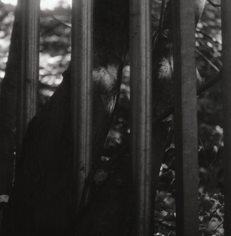 Tree Fence 2