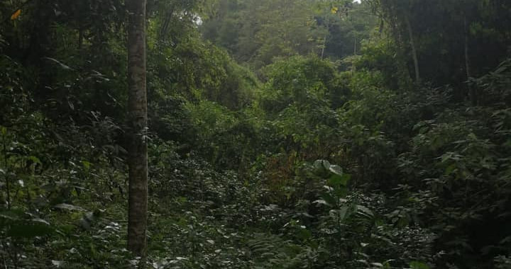 Last Remaining Cloud Forest