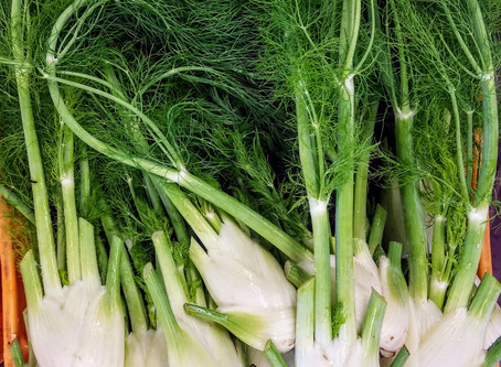Plant Stories: Fennel
