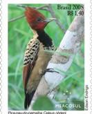 Pica-pau e coruja ilustram novos selos lançados pelos Correios