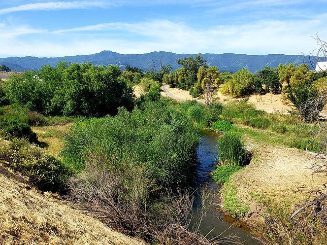 Guadalupe River US Blossom Hill Riparian