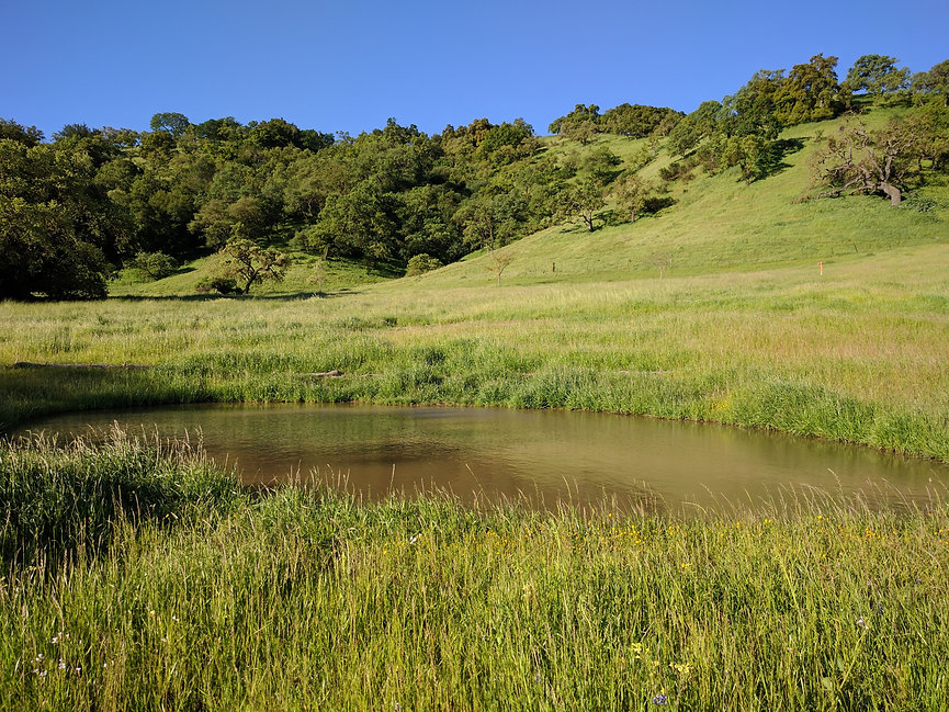 South Valley Meadow Restoration.jpg