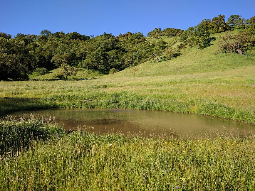 South Valley Meadow Restoration.jpg