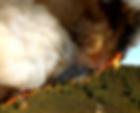 2019 marin fire forum teaser.png