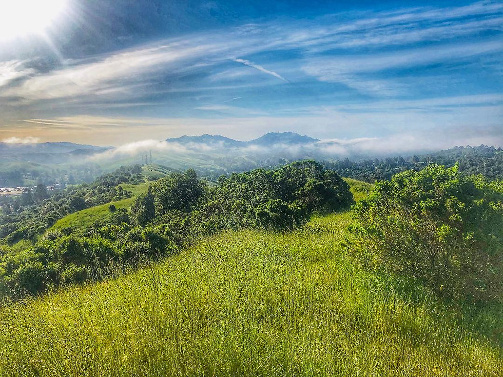 Rolling green hills.jpeg