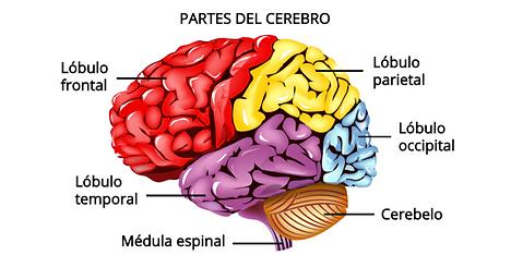 cerebro-2-e1565718119890.png