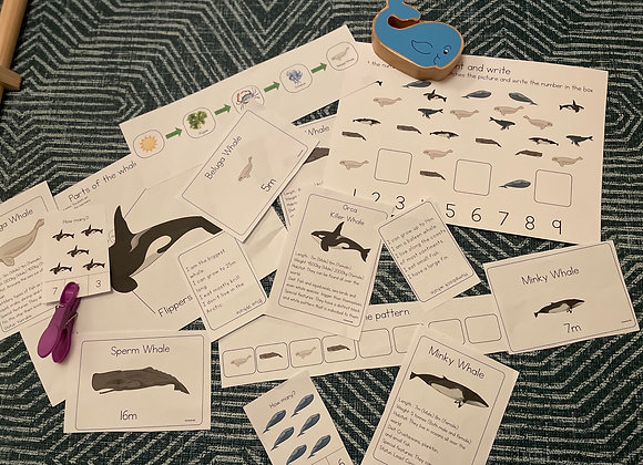 Full set of whales learning set