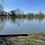 Thumbnail: Pond and Lake Life 3 Part cards