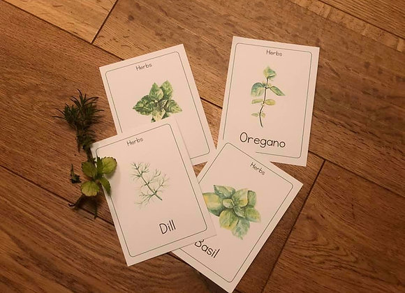 Printed Herb identification cards