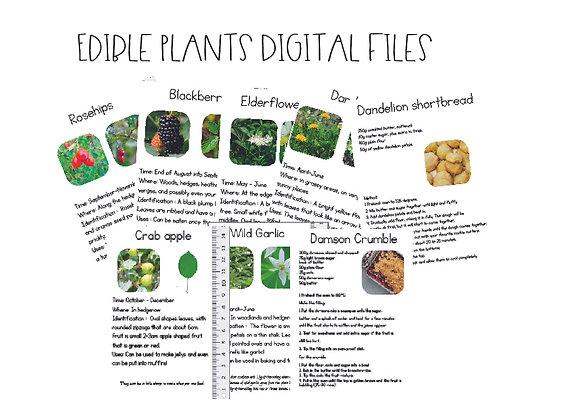 Printable Edible Plants cards