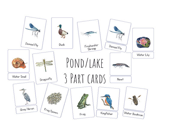 Pond and Lake Life 3 Part cards