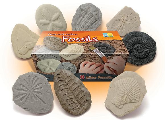 Let's Investigate – Fossils