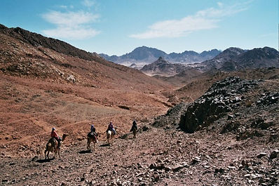 Kamelen wandeling.jpg