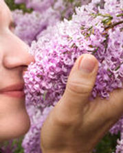 stop-smell-lilacs-2492419.jpg