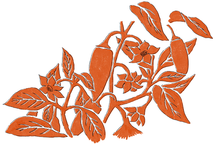 Turmeric & Ginger Illustrations-04.png