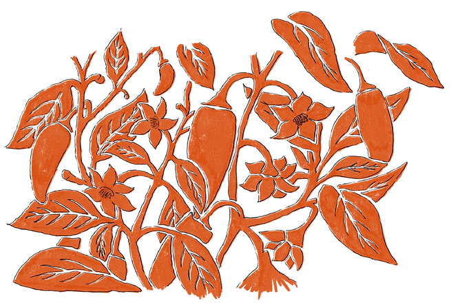 Turmeric & Ginger Illustrations-02.png