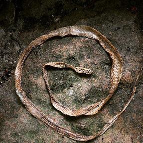 Snake skin SM.jpg