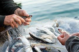 reti pesca