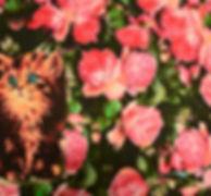 """Футер двунитка с рисунком Бугульма. """"Озорница"""" https://www.lds-market.com/trikotazhnoye-polotno"""
