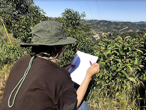 An Introduction to Nature Journaling