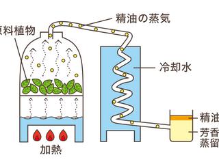 精油は植物からの恵み