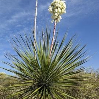 Native Plant Q&A