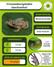 Bromelígenas: Crossodactylodes izecksohni