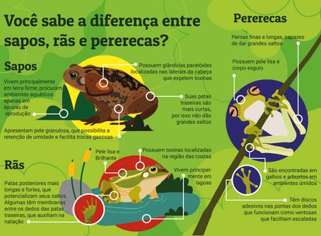 Você sabe a diferença entre sapos, rãs e pererecas?