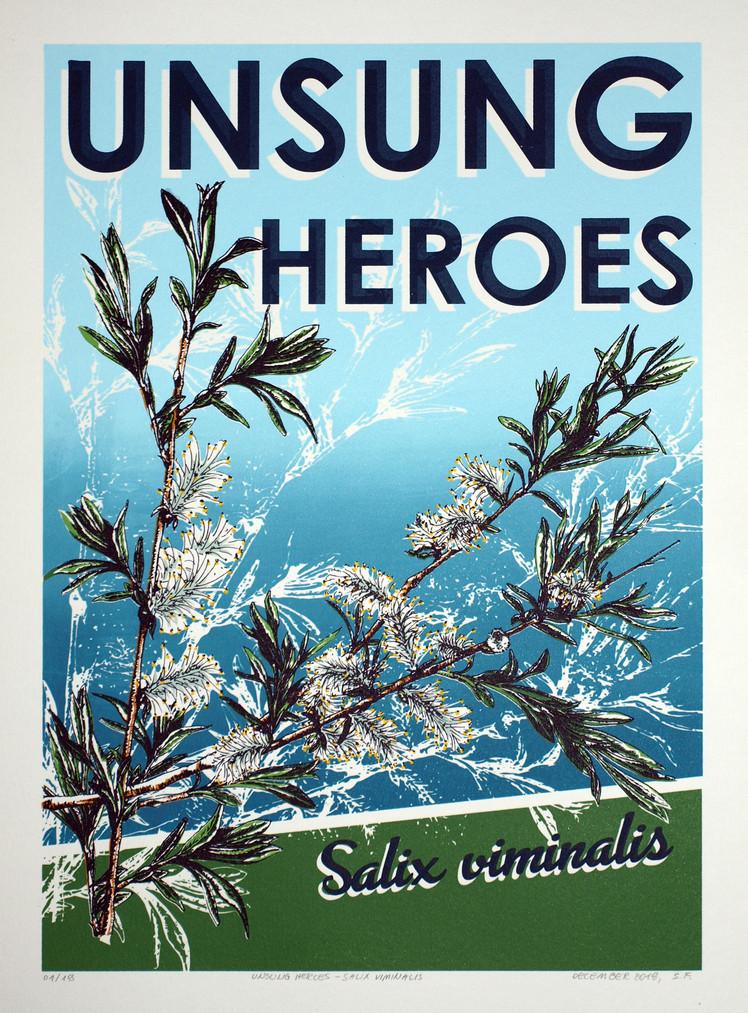 Unsung Heroes - Salix viminalis