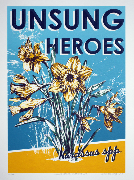 Unsung Heroes - Narcissus spp_