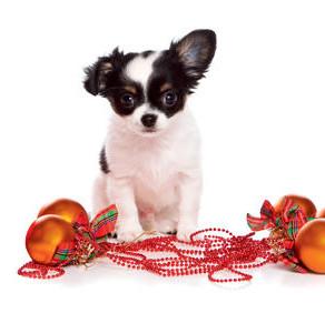 Un Noël sécuritaire avec notre animal de compagnie