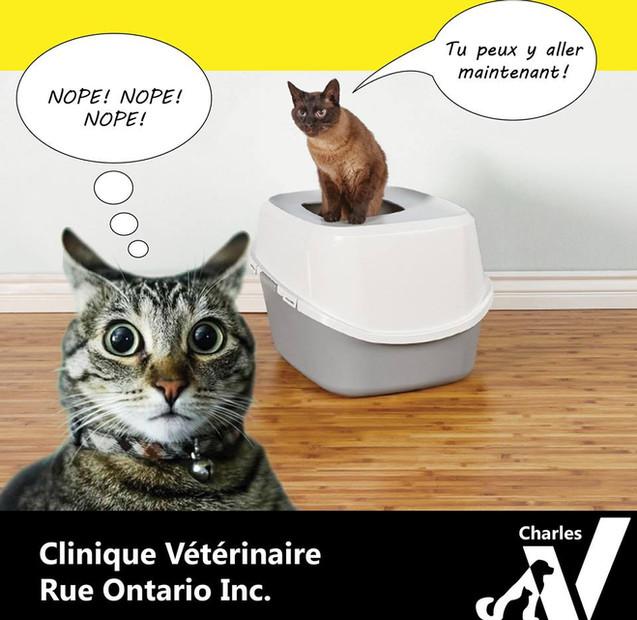 Pourquoi…votre chat dédaigne sa litière?  Le niveau de propreté, l'emplacement, le nombre de chats à la partager et la présence d'un dôme sont autant de facteurs pouvant le gêner à y aller.  Note : Lors de mictions inappropriées, il est important de s'assurer auprès de votre vétérinaire que le problème n'est pas d'ordre médical avant de conclure à un trouble du comportement. En effet, la douleur lors des mictions dans la litière peut créer une aversion, ils tenteront alors de se soulager ailleurs.