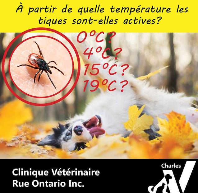 Les tiques sont actives dès que la température externe est égale ou supérieure à 4°C, cela signifie que selon les années, la prévention contre ce parasite peut parfois s'étendre de mars jusqu'à décembre!   Pensez à protéger votre animal tant qu'il n'y a pas gel au sol.