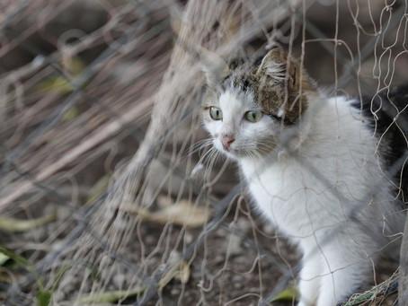 Beauce : la SPA mobile stérilisera des chats errants