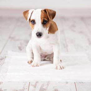 Éducation de la propreté chez le chien