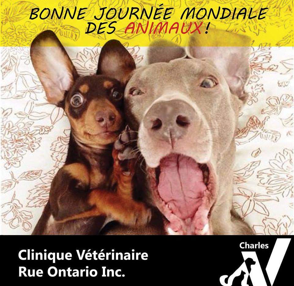 Bonne journée mondiale des animaux! De la part de l'équipe de la Clinique!