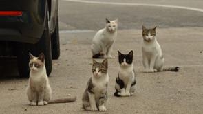 Pourquoi stériliser les chats errants ?