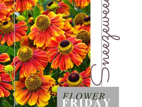 November 13th, 2020 Flower Friday