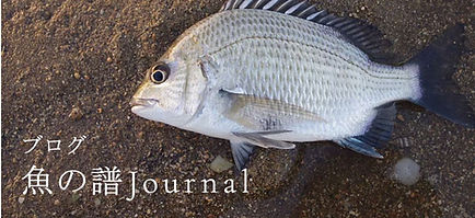 ブログ「魚の譜Journal」へのリンク